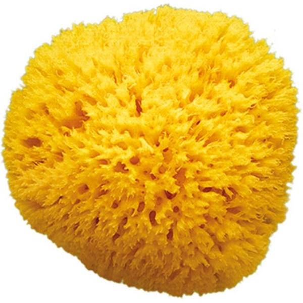 Picture of OK Baby Φυσικό Σφουγγάρι Θαλάσσης Arxipelago no. 12